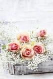 Härliga rosa rosor och Gypsophila (brudslöjablommor) Arkivfoton