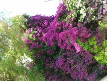 Härliga rosa trädblommacollors Arkivfoto