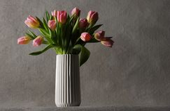 Härliga rosa tulpan Royaltyfria Foton