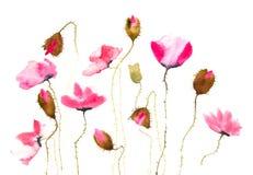 Härliga rosa vallmoblommor Royaltyfri Fotografi