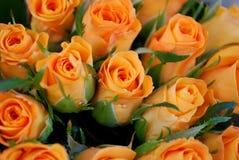 härliga rose blommor Arkivfoto