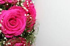 Härliga rosor bildade in i en härlig bukett Arkivfoton