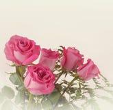 Härliga rosor i tappningstil Royaltyfri Fotografi