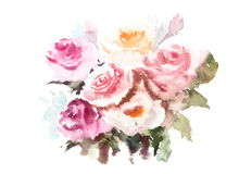 Härliga rosor, vattenfärgillustratör Royaltyfria Bilder
