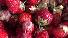 Härliga saftiga röda jordgubbar arkivfilmer