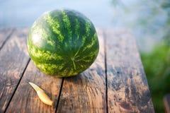 Härliga saftiga snittvattenmelon och en kniv Arkivfoto