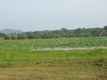 Härliga sceniska sikter av träd som är ljusa - gräsplan, South Asia, Yalla, Sri Lanka royaltyfri fotografi
