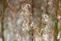 Härliga Serene Nature Winter Forest Plant Royaltyfri Foto