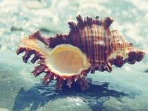 Härliga Shell Paradise Blue arkivbild