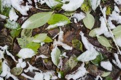 Härliga sidor i vinter på skog royaltyfri fotografi