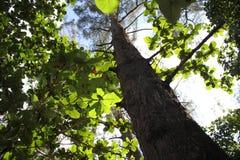 Härliga sidor på trädet Royaltyfria Bilder