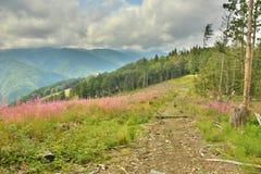 Härliga sikter av bergen Arkivfoto