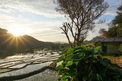 Härliga sikter av risfält i byn med berg, träd och hyddahus på Moni Village, Flores, när solen stiger arkivfoto