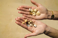 Härliga skal på händerna. Ferier i Kuban, karibisk strand Fotografering för Bildbyråer