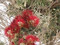 Härliga små blommor i de uppseendeväckande färgerna Arkivbild