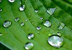 Härliga små droppar på det härliga gröna bladet royaltyfri fotografi