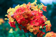 Härliga små färgglade blommor Royaltyfria Bilder