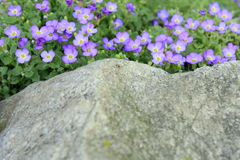 Härliga små lilablommor Royaltyfri Foto