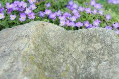 Härliga små lilablommor Arkivbild