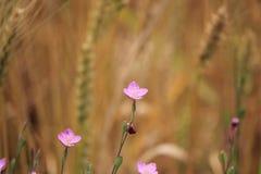 Härliga små rosa färgblommor arkivbild