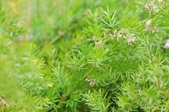 Härliga små rosa färgblommor och litet grönt blad för bakgrundsmodell Royaltyfria Foton
