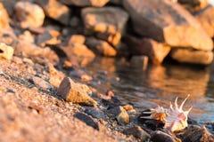 Härliga snäckskal på stranden Royaltyfri Foto