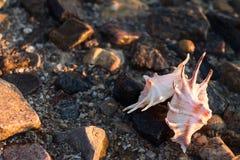 Härliga snäckskal på stranden Fotografering för Bildbyråer