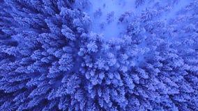 Härliga snöig träd stock video