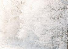 Härliga Snowy White Forest In Winter Frosty Day Vinterträn arkivbilder