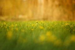 Härliga sol- blommor i fältet Arkivfoton