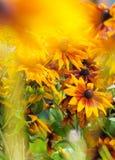 Härliga solblommor samlar ihop i vas på trädgården Arkivfoton