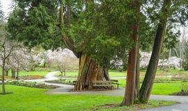 Härliga Stanley Park i Vancouver - VANCOUVER - KANADA - APRIL 12, 2017 Arkivbild