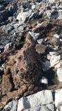 Härliga stenar på stranden arkivbilder