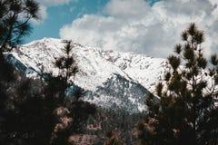 Härliga steniga berg som täckas i snö som skjutas från en skog arkivbild