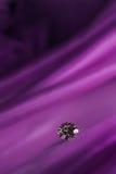 Härliga stora diamantsmycken på mörk violett torkdukebakgrund Fin naturlig ädelsten Brillant sken Royaltyfri Fotografi
