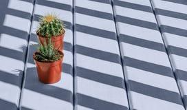 Härliga stora gröna kaktus- och suckulentväxter i röda krukor ar Royaltyfri Foto