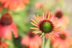 Härliga summerflowers Arkivfoton