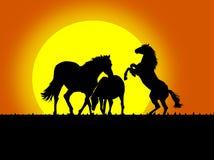 härliga svarta hästsilhouettes Fotografering för Bildbyråer