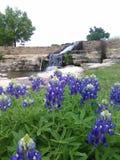 Härliga Texas Bluebonnets arkivfoto