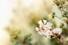 Härliga torkade blommor på ljus bakgrundssuddighet Arkivbild