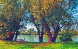 Härliga träd för höstlandskapvisning bredvid floden Arkivfoton