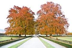 Härliga träd i Cesky Krumlov under höst Royaltyfria Bilder
