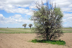 Härliga träd i den plogade jorden Fotografering för Bildbyråer