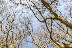 Härliga träd i skogen Arkivbilder