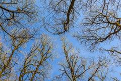 Härliga träd i skogen Fotografering för Bildbyråer