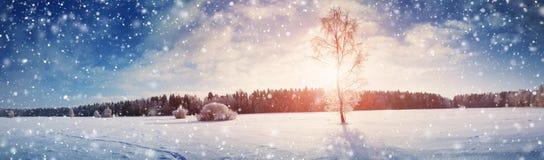 Härliga träd i vinterlandskap i otta fotografering för bildbyråer