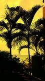 Härliga träd med guld- himmel Arkivfoto