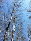 Härliga träd och blå skyï¼ ŒI gillar arkivbilder