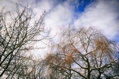 Härliga träd och himmel Arkivbilder