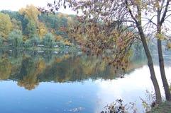 Härliga träd som reflekterar i sjön i höst arkivbilder